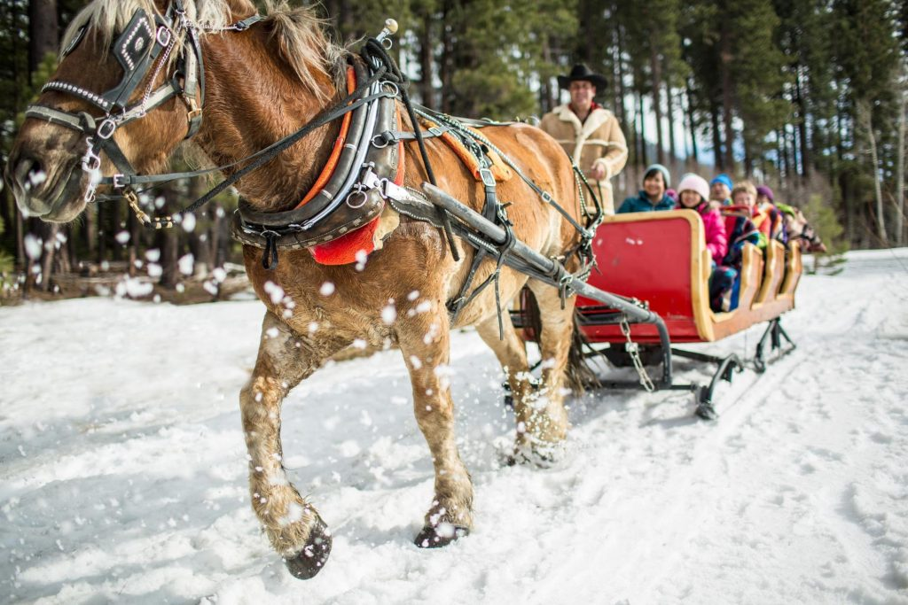 Horse-drawn carriage ride in South Lake Tahoe